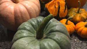 100 Heirloom Food Truck Squash Identified Is It Too Late To Plant Bulbs And More