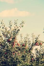 Apple Orchard Pumpkin Patch Sioux Falls Sd by The Little Hermitage Joie De Vivre Joyful Things Pinterest