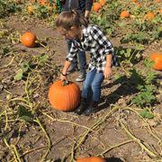 Goebbert Pumpkin Patch In Barrington Il by Goebbert U0027s Pumpkin Patch 56 Photos U0026 66 Reviews Fruits