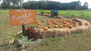 Pumpkin Patch In Orlando Fl by Maze Dayz Fall Festival Cowart Ranch And Farms