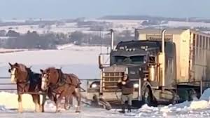 100 Semi Truck Burly Minnesota Horses Pull Up Icy Driveway The Weather