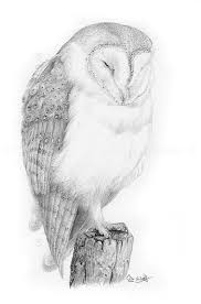 New Pencil Study: Barn Owl – The Hazel Tree Country Barn Art Projects For Kids Drawing Red Silo Stock Vector 22070497 Shutterstock Gallery Of Alpine Apartment Ofis Architects 56 House Ground Plan Drawings Imanada Besf Of Ideas Modern Best Custom Florida House Plans Mangrove Bay Design Enchanted Owl Drawing Spiral Notebooks By Stasiach Redbubble Top 91 Owl Clipart Free Spot Drawn Barn Coloring Page Pencil And In Color Drawn Pattern A If Youd Like To Join Me Cookie