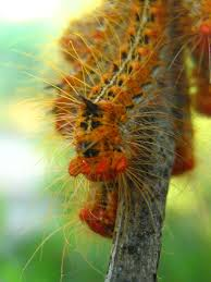 100 Caterpillar Chile The Worlds Most Recently Posted Photos Of Caterpillar And Chile