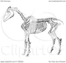 Animal Anatomy Coloring Book Gallery Website Horse