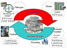 Define Carbon Sink Geography by Paoletti E Tuovinen J P 2011 Cost Action Fp0903 U201cresearch