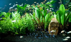 Petco Fish Aquarium Decorations by Plant Your Way To A More Beautiful Freshwater Aquarium