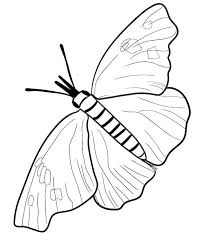 Butterflies Coloring Pages Snout Butterfly Page Monarch Caterpillar