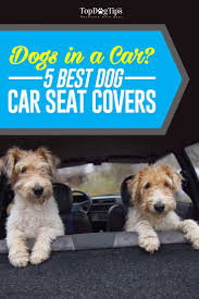 Top 10 Dogs That Dont Shed by Top 8 Best Car Seat Covers For Dogs In 2017 That Are Easy To Clean