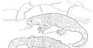 Elegant Desert Animal Coloring Pages 16 With Additional Free Book
