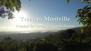 100 Treetops Maleny Montville Accommodation