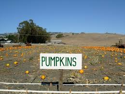 Pumpkin Patch Farm Half Moon Bay by Heed The Call Of The Pumpkin At These Great Bay Area Pumpkin Farms