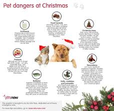 Are Christmas Trees Poisonous To Dogs by Lorain County Animal Emergency Center Home Facebook