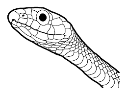 Green Snake Line Drawing For Coloring Page