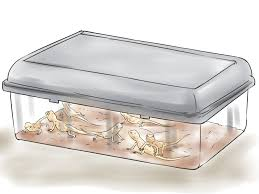 Do Baby Leopard Geckos Shed by How To Breed Leopard Geckos 14 Steps With Pictures Wikihow