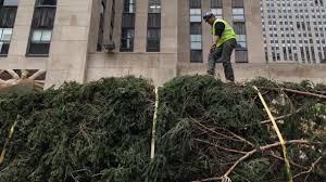 Christmas Tree Disposal Nyc 2015 by 2015 Rockefeller Center Christmas Tree Arrives In Nyc Am New York