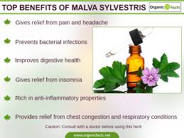 Pumpkin Seed Prostate Congestion by 7 Amazing Malva Sylvestris Or Common Mallow Benefits Organic Facts