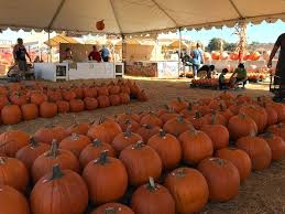Pumpkin Patch Pasadena Area by Epic Carlsbad Corn Maze And Pumpkin Patch Oc Mom Blog