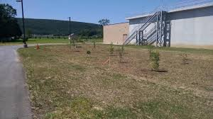 Christmas Tree Seedlings Wholesale by Commercial Tree Planting Wholesale Christmas Trees