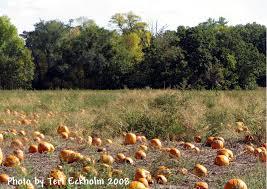 Best Pumpkin Patch Minneapolis by Minnesota Real Estate Update October 2010