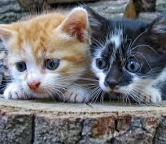 fleas on cats symptoms when to worm de worm your kitten or cat how often worm symptoms