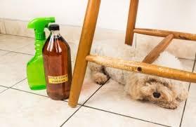 répulsif naturel chien tout pratique