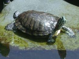 faqs about turtles in general 2