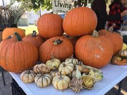 Tucson Pumpkin Patch by Patch Edmond Farmer U0027s Market Edmond 14 October
