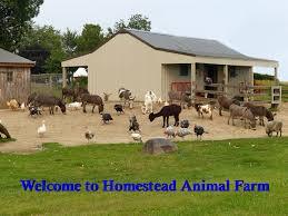 Southeast Wisconsin Pumpkin Patches by Homestead Animal Farm Family Fun Corn Maze Pumpkins