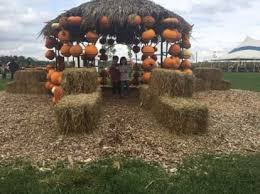 Pumpkin Farms In Belleville Illinois by The Best Pumpkin Patches For Picking Your Own Jack O U0027 Lantern