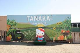 Tanaka Pumpkin Patch Irvine by Hello Kitty Is Calling Irvine Home For A Full Year At Tanaka Farms