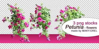 PNG STOCK SET Petunia Flower 2 By MAKY OREL