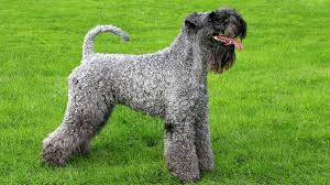 Which Dogs Do Not Shed Or Smell by 15 Dog Breeds That Don U0027t Smell Barking Royalty