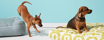 how to find the best dog bed for your pup fitdog sports club