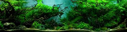Beautifully Designed Aquariums Compete In The International ... Aquascape Of The Month June 2015 Himalayan Forest Aquascaping Interesting Driftwood Placement Aquascapes Pinterest About The Greener Side Aquascaping Design Checklist Planted Tank Forum Simons Blog Decoration Bring Nature Inside Home Ideas Downhill By Arie Raditya Aquarium 258232 Aquaria Creating With Earth Water Fire Air Space New Aquascapemarch 13 2016page 14 Page 8 Aquapetzcom Magical Youtube 386 Best Tank Images On Aquascape