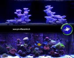 Product Review: PM Reef Ceramic Dry Rock - Reefs.com Is This Aquascape Ok Aquarium Advice Forum Community Reefcleaners Rock Aquascaping Contest Live Rocks In Your Saltwater Post Your Modern Aquascape Reef Central Online There A Science To Live Rock Sanctuary 90 Gallon Build Update 9 Youtube Page 3 The Tank Show Skills 16 How Care What Makes Great Large Custom Living Coral Aquariums Nyc