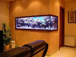 poisson eau douce aquarium tropical aquari home dans les vosges vente de poissons à les forges 88