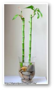 Best Plant For Bathroom by Best Plants For Your Bathroom Croydex