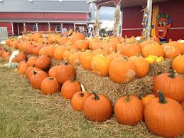 Pumpkin Patch Colorado Springs 2015 by 15 Great Pumpkin Patches In Oklahoma