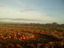 Hawes Farm Pumpkin Patch Anderson Ca by Northwestern California Northwestern California U Pick Farms Find