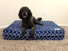 Tempur Pedic Dog Bed by 100 Tempurpedic Dog Bed Snoozer Cozy Cave Dog Bed 12 Colors