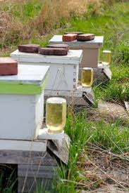 320 Best Beekeeping Images On Pinterest | Bee Keeping, Bees Knees ... Hive Time Products A Bee Adventure For Everyone Bkeeping Everything You Need To Know Start Your First Best 25 Raising Bees Ideas On Pinterest Honey Bee Keeping The Bees In Your Backyard Guide North Americas Joseph Starting Housing And Feeding Top Bar Beehive Projects Events Level1techs Forums 562 Best Images Knees 320 Like Girl 10 Mistakes New Bkeepers Make Splitting Hives Increase Cookeville Bkeepers Nucleus Colony Or How A 8 Steps With Pictures