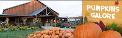 Best Pumpkin Patches In Cincinnati by Fall On The Farm Blooms U0026 Berries Farm Market