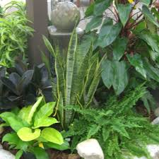 Knollwood Garden Center and Landscaping Houseplants Foliage Plants
