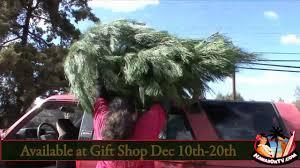 Christmas Tree Baler For Sale by Kula Botanical Garden Christmas Trees 2010 Youtube