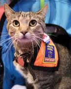 service cats nea he s a cool cat