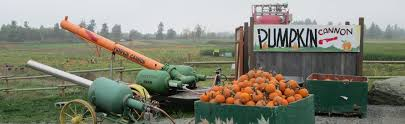 Best Pumpkin Patch Snohomish County by Carleton Farm Farm Fresh Family Fun