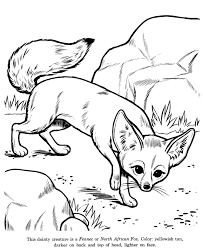 Shining Design Fox Animal Coloring Pages Fennec Identification Drawing Page Free Printable North African Featuring Wild Animals