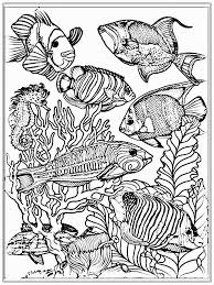 Adult Fish Color Pages At Ocean Coloring For Adults