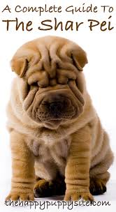 Do Shar Peis Shed Hair by A Complete Guide To The Shar Pei Dog Breed