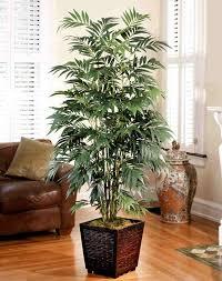 palmier d intérieur espèces propriétés et conseils d entretien